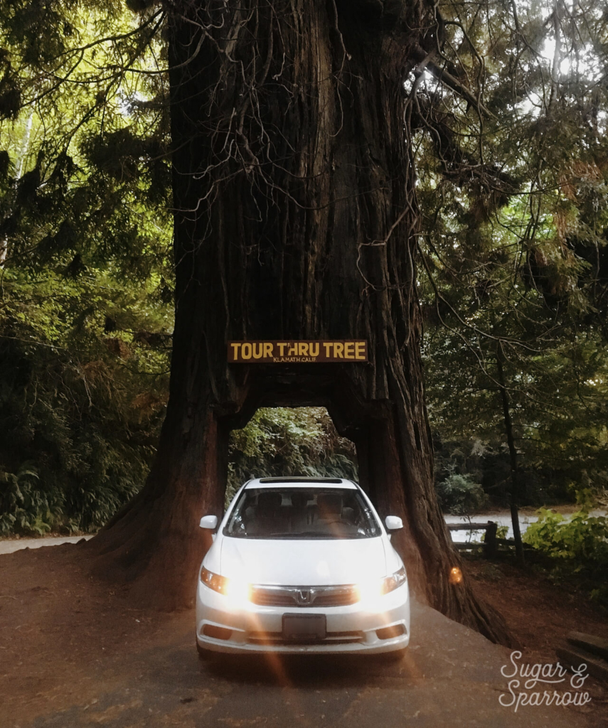Drive Thru Tree redwood forest california