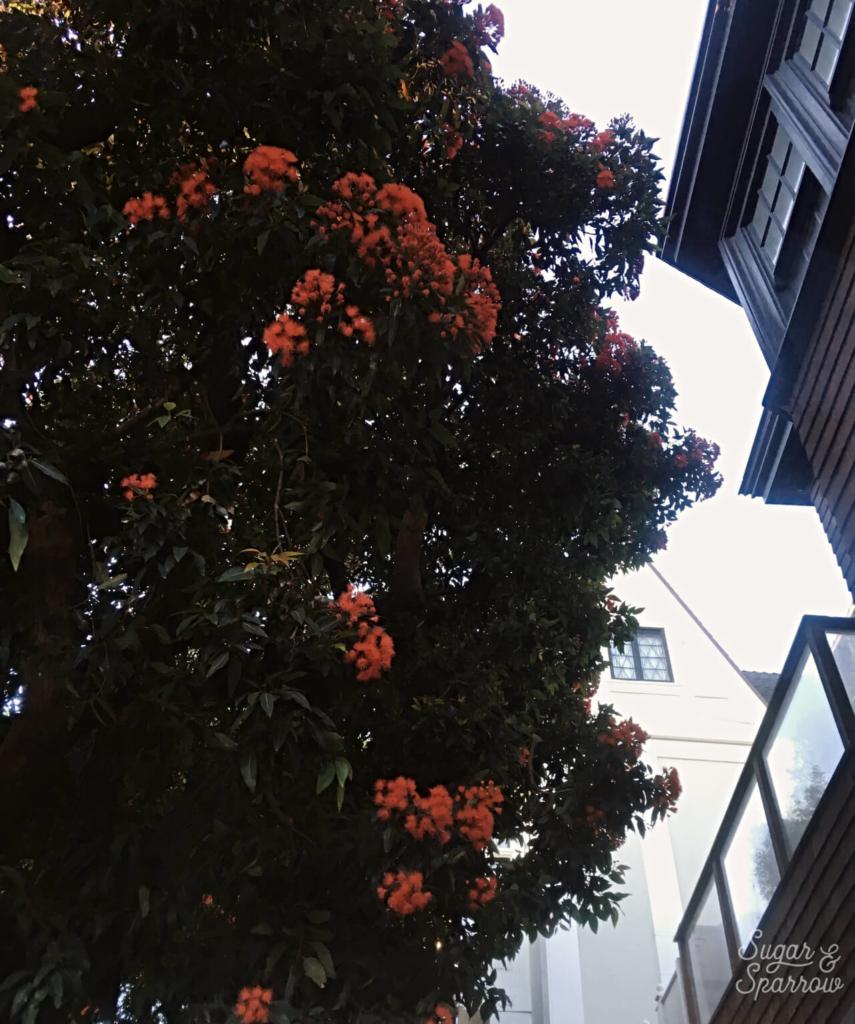 san francisco foliage